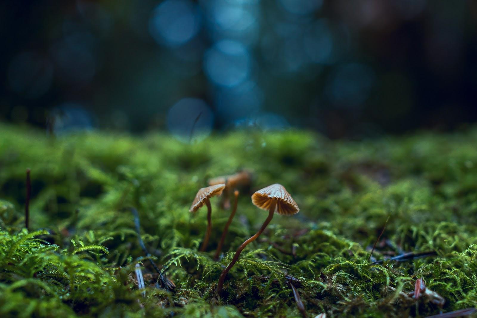The Fascinating World of Fungi: How Fungi Benefits Plants