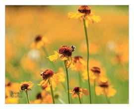 Photo: Eastern Sierras-20120717-785