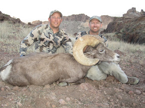 Photo: Jay Scott and Darr Colburn with Donnie Young's 2011 AZ Super Raffle Sheep.  This is the largest Nelsoni ram to be harvested on this special tag.