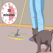 tu casa no huela a tus mascotas