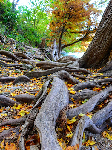 Many roots by Cathy Hood - Nature Up Close Other Natural Objects
