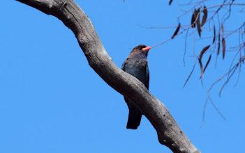 Photo: Dollarbird