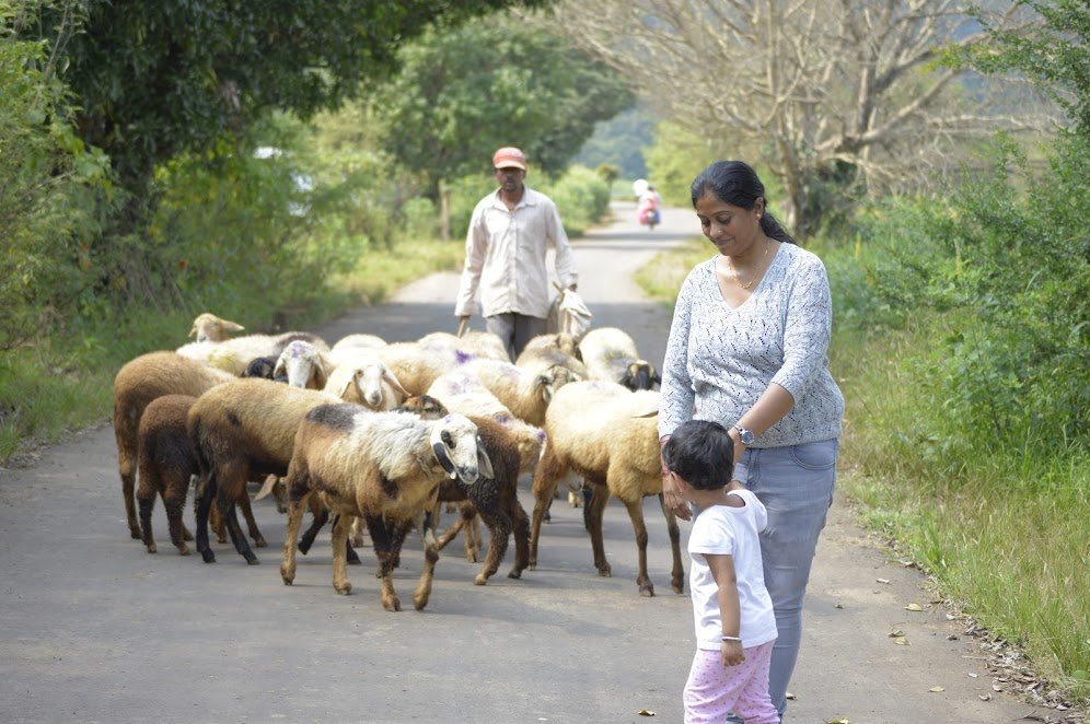 Kids exposed to many things of rural life