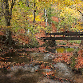 by Гојко Галић - Buildings & Architecture Bridges & Suspended Structures ( stream, colors, fall, forest, bridge )