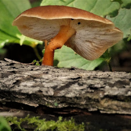 by Denise O'Hern - Nature Up Close Mushrooms & Fungi (  )