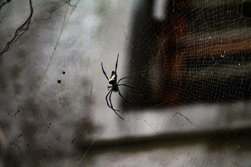 Spider Africa ! di Renata Roattino@jhonninaphoto