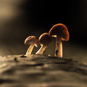 My Brodher by Fatriyanto Mooduto - Nature Up Close Mushrooms & Fungi