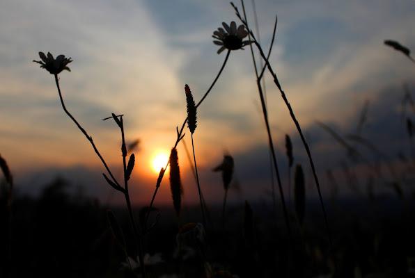 Buonanotte, buonanotte, fiorellino di Lela69
