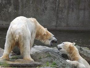 Photo: Diskussion zwischen Tosca und Nancy ;-)