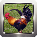 Rooster and Chicken Sounds icon