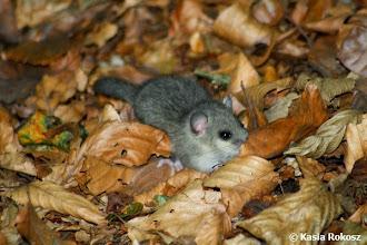 Photo: Malutki leśny przyjaciel :)