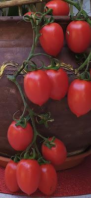 Pomodoro che passione di mariella_aliotta
