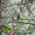 Birds in Uyuca Biological Reserve