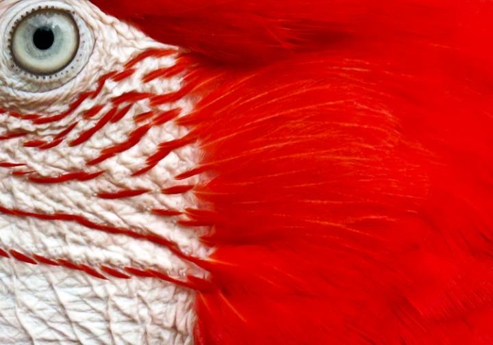 Look to my red passion di Silvio Lorrai