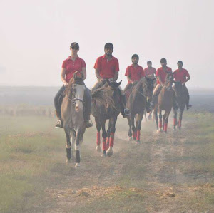 Working in India with Horses | Krys Kolumbus Travel