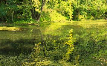 Photo: La nature a repris ces droits tout le long du canal.