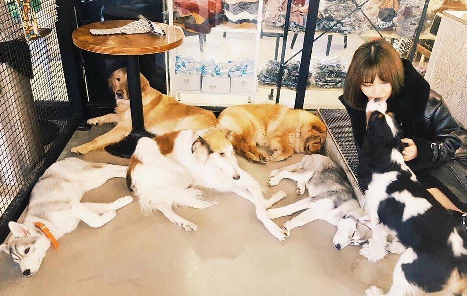 kittib gdragon dogs 1