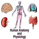 Human Anatomy and Physiology icon