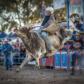 Hang In There by Paul Milliken - Sports & Fitness Rodeo/Bull Riding ( bucking bull, rodeo, bullriding )
