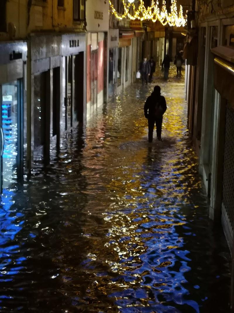 Venice di boletusedulis