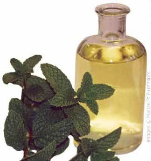 Make Your Own Mint Infused Oil & Recipes