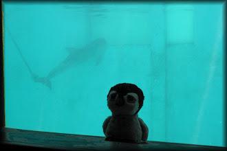 Photo: Carlisle at the Clearwater Marine Aquarium.