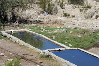 Photo: Cattle trough