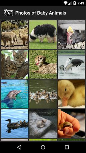 婴儿动物照片