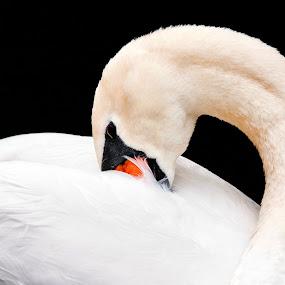 Flamingo by Jane Fourie - Animals Birds ( bird shots, bird, nature, bird photos, wildlife,  )