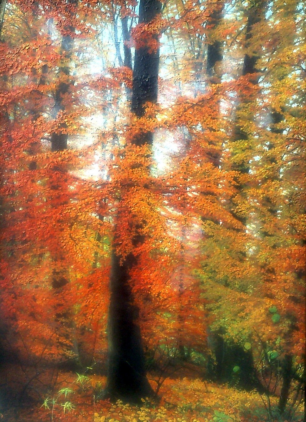 EUROPEAN BEECH I - Illustration (landscape); Book cover - Oil on wood - 19,69 X 13,39 in.jpg