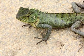 Photo: Year 2 Day 59 - Lizzy Lizard