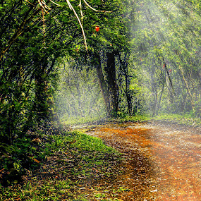 Betung Forest by M Thantowi - Landscapes Forests