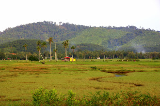 Photo: Year 2 Day 102 - On the Outskirts of Cenang