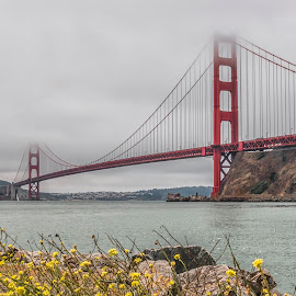 San Francisco Bridge by Sue Matsunaga - Buildings & Architecture Bridges & Suspended Structures