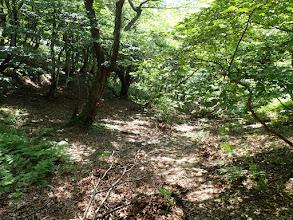 夫婦滝方面の登山道に合流