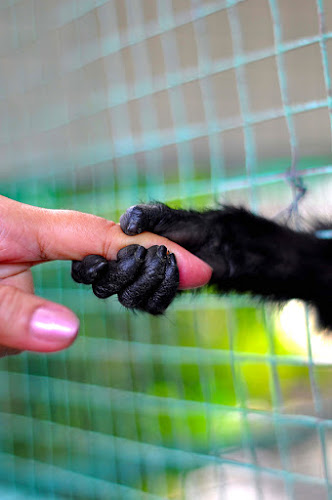 connecting... by Rodrigo Layug - Animals Other ( animals, pets, monkey )