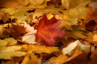 Photo: Puzzle Fall