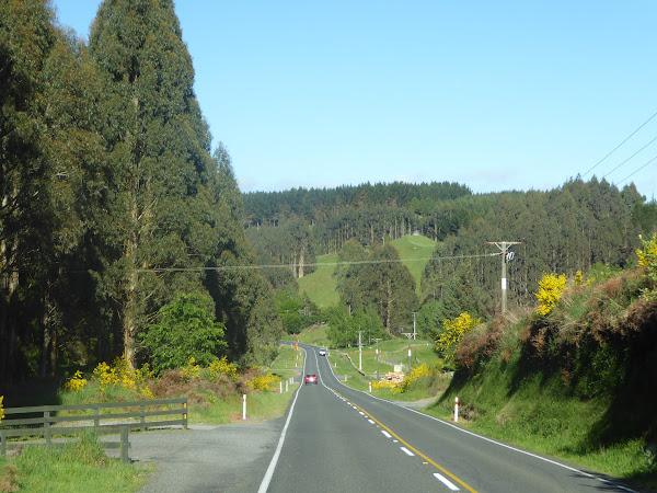 Новая Зеландия - три недели с другой стороны глобуса