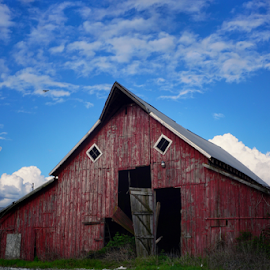 Red dead  by Todd Reynolds - Buildings & Architecture Decaying & Abandoned