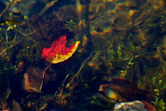 Photo: Now everyone's going to think I'm totally into photographing leaves in water, but it just turned out that this one caught my eye tonight.