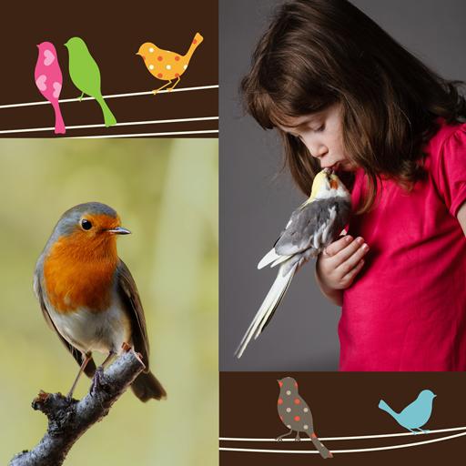 Download 103+ Foto Gambar Burung Merpati Kolase HD Terbaru