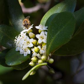 Bee Line.jpg
