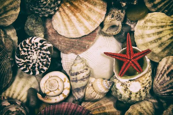 Profumo di mare di Donatella Brusca