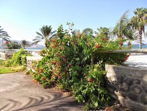 Photo: цветы на заборе