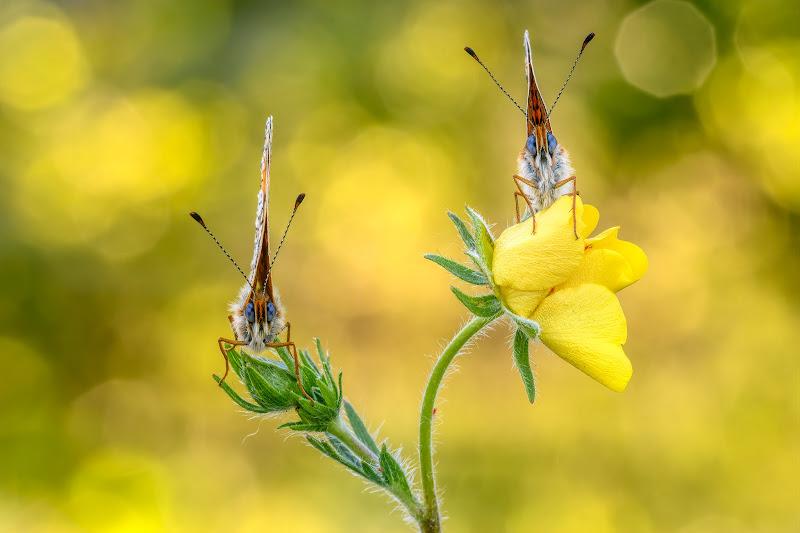 Fiori e farfalle di Sara Jazbar