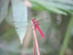 Photo: Dragonfly
