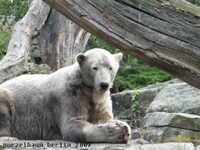 Photo: Knut hat sich ein neues Plaetzchen gesucht ;-)