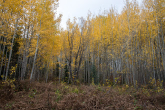 Photo: Woods near Fish Creek