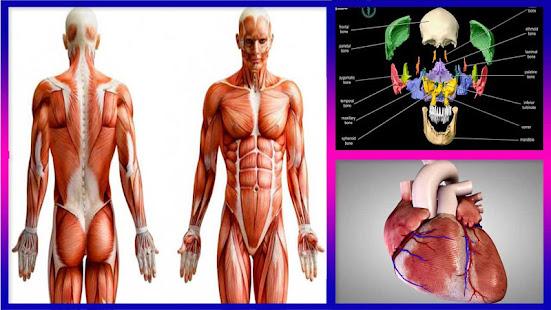 3d Human Anatomy Apps On Google Play