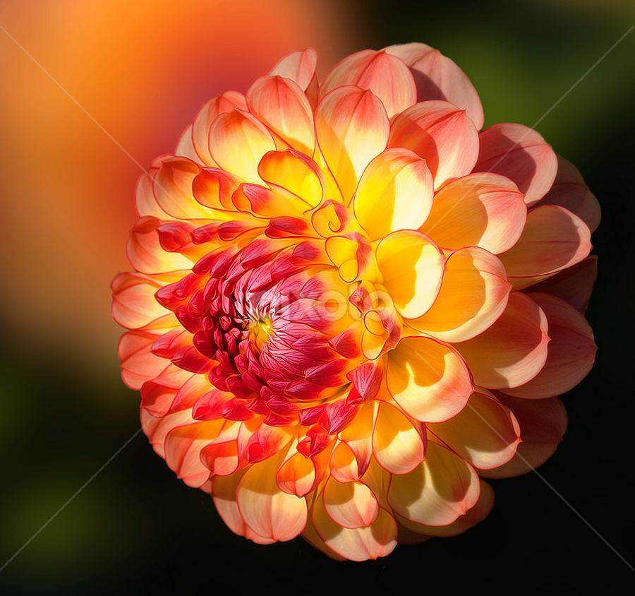 by Carl Sieswono Purwanto - Nature Up Close Flowers - 2011-2013